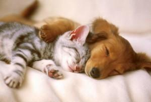 assurance chien chat[23972]